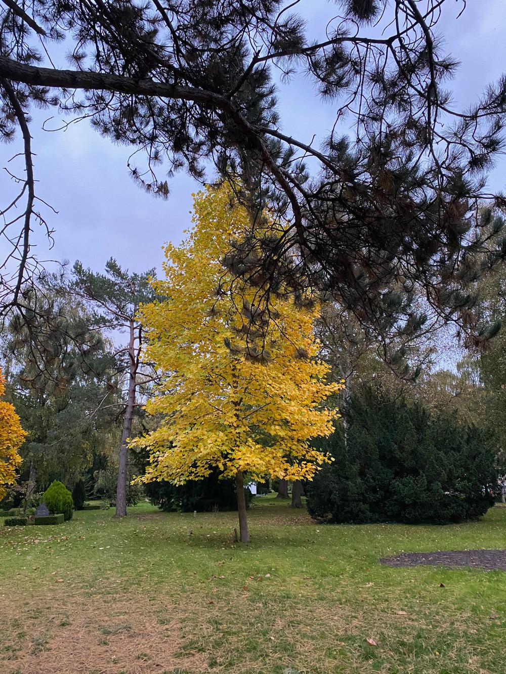 Bispebjerg kirkegård efterår