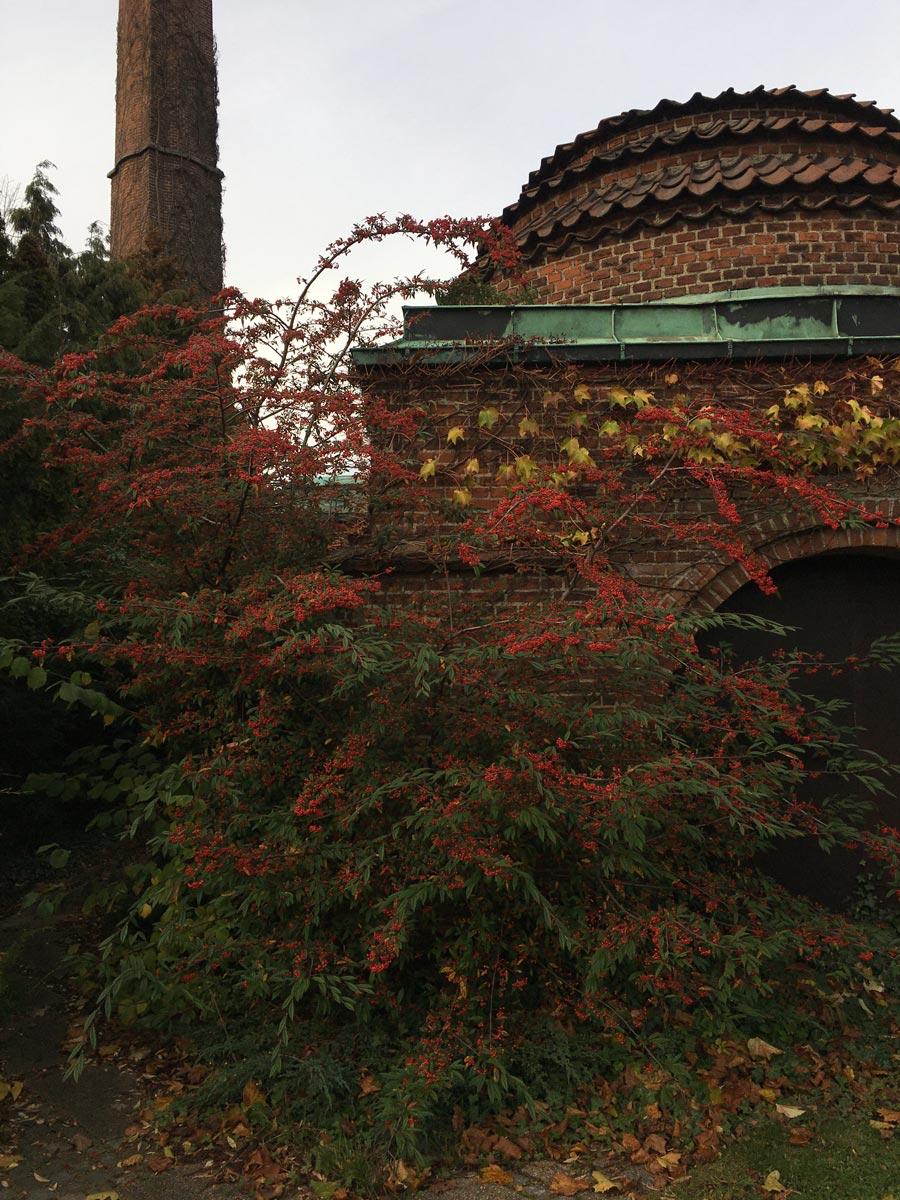 Bispebjerg kirkegård dansekapellet efterår